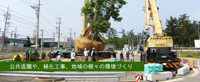 公共造園や、緑化工事、地域の樹々の環境づくり