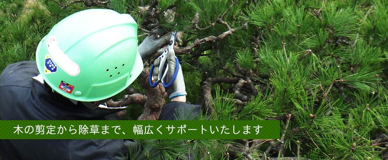 木の剪定から除草まで、幅広くサポートいたします