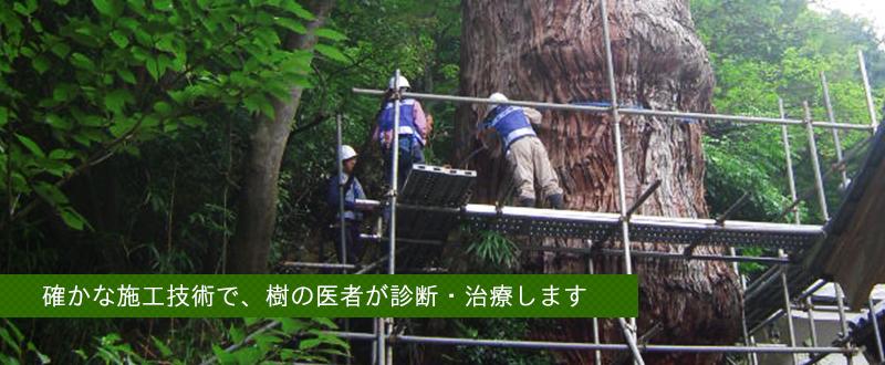 確かな施工技術で、樹の医者が診断・治療します